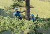 EOG-27.jpg (Joel Spooner Photography) Tags: arblife arborist bc expeditionoldgrowth joelspooner joeliphoto climbtrees exploretrees explorebc inspire learntoclimb oldgrowth treeclimbing