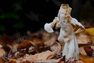 White Saddle Fungus DSC_6975