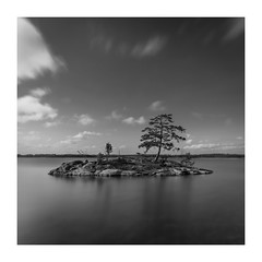 The hope of life (Explored september 25, 2017) (Andreas Larzon Photography) Tags: andreaslarzon autumn bw blackandwhite calmwater centeredandsymetry cliffs glasswater highcontrast islet landscapephotography lightclouds longexposure midday mirrorwater nature naturereserve nikond7200 pinetree rocks sea seascape sidelight sigma1020mmf35exdchsm sky stendörrensnaturreservat sweden södermanland seaside