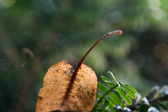 Autumn will soon  arrive (Francisco (PortoPortugal)) Tags: 1852017 20140730fpbo3024 natureza nature outono autumn porto portugal portografiaassociaçãofotográficadoporto franciscooliveira