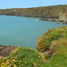 Coastal flowers (madein.w) Tags: coast flowers wild seascape outdoor sea pembrokeshire wales plants ocean cliffs view