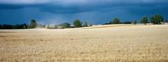 Farming Land - Porta 400 (magnus.joensson) Tags: sweden swedish skåne farming rainbow c41 hasselblad xpan 90mm kodak porta 400 handheld 24x65 august