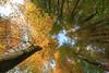 Jedem Krönchen sein tönchen (Lukas Litz Obb) Tags: beechforest forest light naturephotography tree 32 5d 5dmk1 baum buchenwald canon europa landschaft licht naturfotografie neuwied oberbieber rheinlandpfalz umwelt wald nr nwd obb queenmum baumkrone herbst