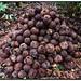 Brazil nut pile