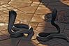 cobra (Mario Barzionni) Tags: morocco marocco trip motor motorbike bmw r1200gs sun summer sole caldo hot estate desert deserto viaggio marrakech cobra jamaa el fna