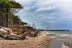 Darßer Weststrand (janmalteb) Tags: strand beach clouds wind trees baum meer sea coast baltic ostsee woods