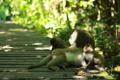 Monkey family - Kaohsiung (Chapo78) Tags: taiwan kaohsiung monkey green nature family animals