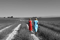 Dans un champs de lavande (teocaramel) Tags: champs lavande campingcar valensole polonaise bleu rouge noiretblanc couleur paysage capture nx2 capturenx2 détourage fille jeune jeunefille chapeau canotier alignement