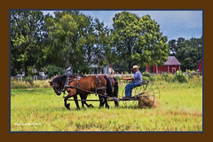 Lazy- Hay-Z Summer Day  ...HSS! (jackalope22) Tags: hss wagon hay farm rake fsrmer barn fence