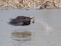 at Lake Baringo, Kenya (Kristoffersonschach) Tags: africa rotel kenia olympus baringo lake wildlife