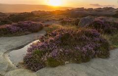 Sunrise (l4ts) Tags: landscape derbyshire peakdistrict darkpeak goldenhour sunrise stanageedge burbageedge gritstone gritstoneedge heather moorland gritstonetors appicoftheweek