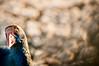 000018_copia2-0035 (Tuzzya) Tags: pennuto cosa vuoi bird animal animali stagno sardegna sassari di platamona