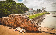 SL-Galle-Fort-canon-1500px-008