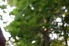 Web (Z!SL) Tags: web bokeh bokehwhores dof depthoffield green urbannature sel24f18z sel24f18za sel2418z sonyphotographing sony sonnar sonnar2418za sonnarte1824 sonynex sonyphotography nex5r nex5 nex minoltaemount emount mirrorless nature