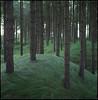the crew (steve-jack) Tags: hasselblad 501cm 80mm cb kodak ektar film medium format wales pembrokeshire trees wood 6x6 bellinifoto monopart c41 kit