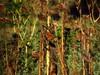 ..ho messo a fuoco un dramma... (scatti_sc Silvia) Tags: caldo estate calore siccità tramonto sunset girasoli campo coltivazioni secco oliodigirasole semi