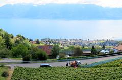 The vendange (oobwoodman) Tags: switzerland suisse schweiz grandvaux alps alpen alpes mountains montagne berge lakegeneva lake léman leman genfersee cully vendange wine vineyards vin vignoble vignes rebe grapes trauben raisins pinot harvest ernte