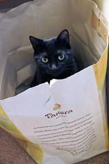 Glad I  Kept The Bag (+David+) Tags: andy blackcat panerabag