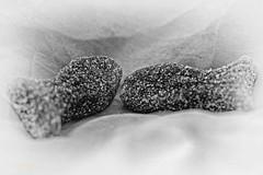 Macro Mondays - Zodiac (DianaFE) Tags: macromondays zodiac fische macro makro fish