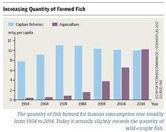 Increasing Quantity of Farmed Fish (boellstiftung) Tags: oceanatlas climatechange pollution sea ocean heinrichboellfoundation maritimeindustry shippingindustry overfishing ecosystem biodiversity