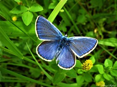 Butterfly 1435 (+780000 views!) Tags: butterfly borboleta farfalla mariposa papillon schmetterling فراشة