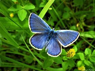 Butterfly 1435