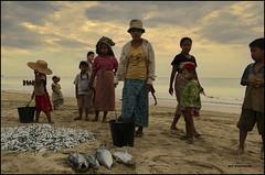La pesca (bit ramone) Tags: pesca fishing birmania burma myanmar sea oceano pez fish bitramone asia pentaxk5