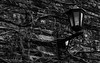 Lamppost (Marko Ignjatovic) Tags: backgorund backgrount belgrade blackandwhite brick candelabras carrots creeperplant dusk forresstfromthe14thcentury grunge iron kandelabr lamp lamponwall lamppost night oldlamp oldlampost pavingstone pole retro retrolamp serbia street streetlight streetlighting texture thewollsofkalemegdan vintagelamp vintagelightoldlightbulbs vintagelmapost wallcihlafortress wallcihlafortresswallclimber wallclimber wallclimberplant