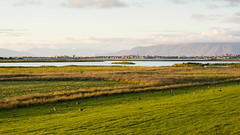 Landscape Iceland. (ost_jean) Tags: ostjean nikon d5200 tamron sp af 1750mm f28 xr di ii vc ld europe iceland landscape landschap colors panorama birds fowl houses mountains vogels dieren calm peaceful countryside reed tranquil grassland ullswater lakeside rushes placid wideangle scenery hills