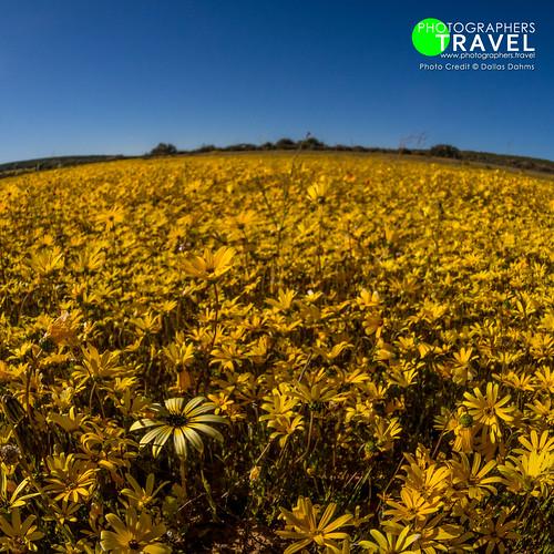 Namaqualand - 2013