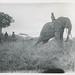 Olifantendressuur in Belgisch-Congo   Elephant training in the Belgian Congo
