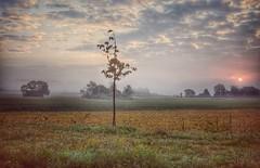 Foggy Sunrise (Tanja-Milfoil) Tags: deutschland germany rheinlandpfalz d5000 nebelig nebel morgen sonnenaufgang aufnahme shot tanja morning sunrise fog foggy mist nikon
