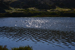 Desierto Florido (ViccMau) Tags: desiertoflorido trekking senderismo tour atacama carrizalbajo vallenar huasco llanosdechalle