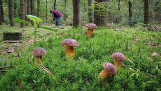 Heute hat sich das Pilze sammeln so richtig gelohnt :-)