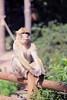 So ... what did we say? (FranSight) Tags: fransight france fran flickr facebook amnéville amneville zoo animaux animalier photographieanimalière animal canon 100mm wild sauvage franimage de fr parc zoologique eos70d eos photo image picture journée sortie faune beau lorraine est nord 2017 lamontagnedessinges la montagne des singes macaque barbarie singe alsace kintzheim magot afrique du gibralta moineau