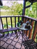 Peace With a View- HFF! (Chris C. Crowley- Always behind but trying to catc) Tags: peacewithaviewhffhappyfencefridayfrontporchbenchtablemosaiclawnthekeithshomebristol bristoltennessee thekeithshouse porch frontporch evacuatingfromhurricaneirma 9122017