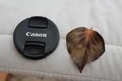 Cover & leaf.... (daveandlyn1) Tags: cover leaf closeup macro iii f3556 efs1855mm 1200d eos canon