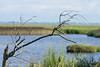 Beobachtungen (juergen.treiber) Tags: moor sehestedt nordsee wattenmeer