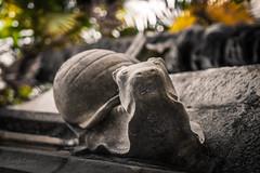 ©RLHG Escargot de pierre (Ricardo Lanas photography) Tags: ©rlhg ©rlhgricardolanasphotography bokeh caracol castillo castillodeabbadie castilloobservatorioabbadia castillos châteaudabbadie francia hdr hendaya maisonsdesilustresantoined´abbadie ricardolanasphotography snailofstone unescargotdepierre esculturas gárgolas f18