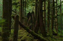 Dry August (Kristian Francke) Tags: forest outdoors nature natural bc canada british columbia landscape green