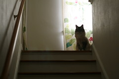 Cat at the Top of the Stairs (bgu42) Tags: cat stairs canon digital canon400d canonrebelxti silhouette apsc feline backlit 50mmf18 canoneos canonef niftyfifty