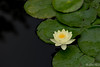Still (Dr.Zhao) Tags: 莲花 lotus