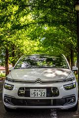 My August (moaan) Tags: takashima shiga japan jp car citroen citroenc4piccaso drive testdrive avenue metasequoia tree lowofmetasequoia green summer midsummer august utata 2017 canoneos5dsr sigma50mmf14dghsm 50mm
