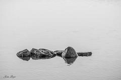 Rivage 4 (josboyer) Tags: rivage pierre roche eau nature water calme calm minimaliste noir et blanc bw