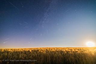 Perseids over Moonlit Wheatfield