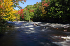Oxtongue River (ashockenberry) Tags: river nature fall autumn leaves ontario ontarionature wilderness oxtongue muskoka