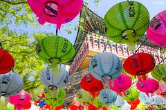 Buddhas Birthday (marksmorton) Tags: seoul asia korea travel color colorful lanterns asianculture festival love temple forest outdoors leaves trees sky contrasts art vibrant horizon landscape dragon