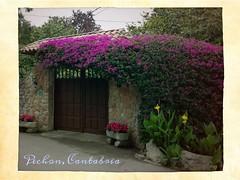 Pechon, Cnatabria, España / Spain (Caronte-mchf) Tags: pechon cantabria españa spain travel turismo turista tour ruta viajar viaje viajes flor flores flower flowers natura rural pueblo