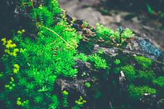 Nature Beauty (wolfphotogtaphy) Tags: nature natural micro macro macrolandscape microlandscape beauty scene green plant tree flower flowers sapa vietnam travel
