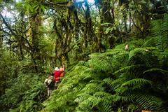 Gocha-la trek in Sikkim, India (David Ducoin) Tags: asia dzongri fern flower gochala hike hiking himalaya india kangchenjunga mountain nationalpark nature plant sikkim treking trekking walking gangtok in